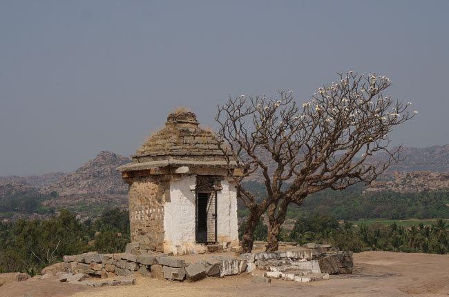 Прекрасное дерево на фоне гор
