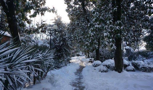 Нетипичная зима в Сочи